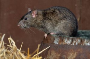 rodenticide ban