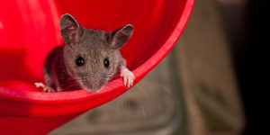 mouse in red bucket