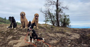 dogs resting on a hike