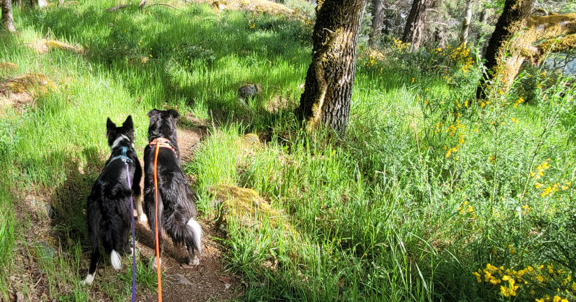 on-leash hike with dogs