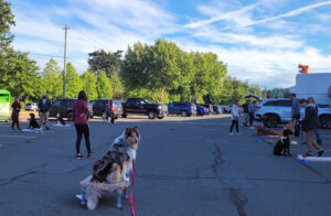 Ethical Canine-outdoor group training session