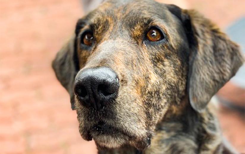 dog - AnimalKind