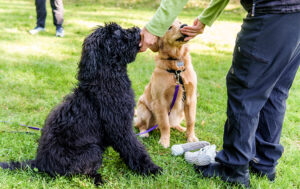 reward-based training with two dogs