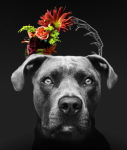 dog with prong collar and flowers crown