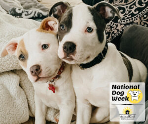 Puppies new guide for dog guardians