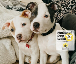 two pups guide for new dog guardians