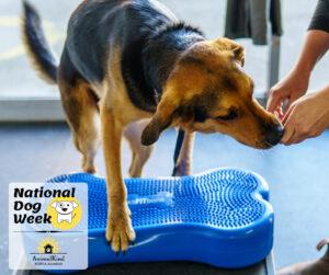 dog eating treats humane dog training indoors