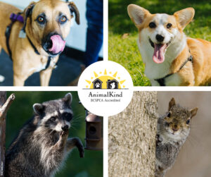 dog training and wildlife and rodent control