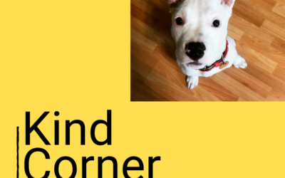 Posts about dog training by AnimalKind trainers