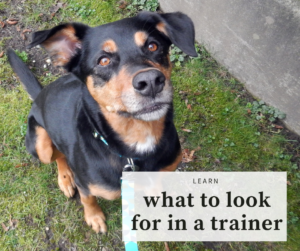 learn what to look for in a dog trainer
