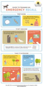 emergency recall dog training