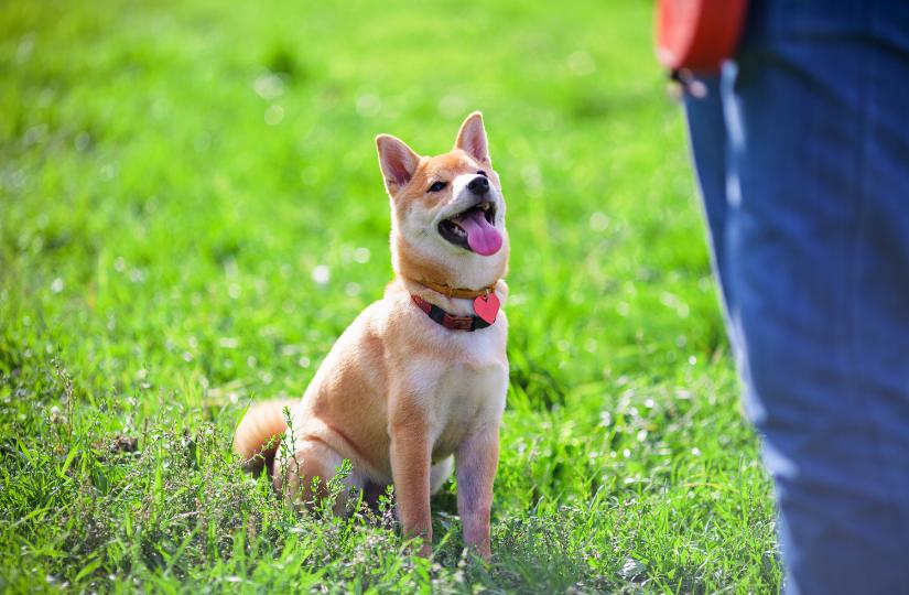 Wild at Heart dog training